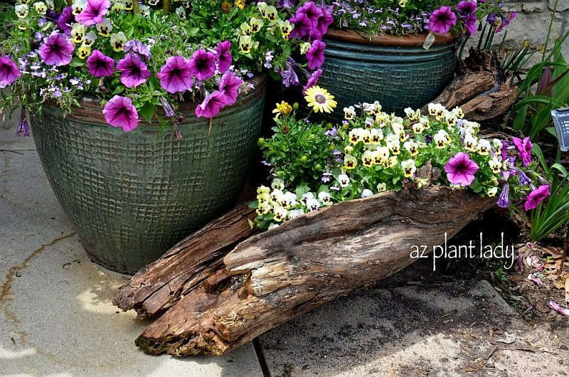 Colorful flowers planted in a log DIY Old Log Flower Planters for a Colorful Garden