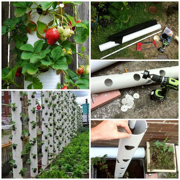 DIY-Strawberry-Tower-from-PVC-Pipe-2