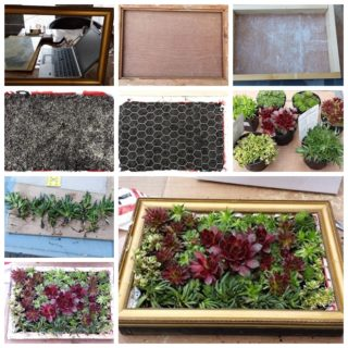 Wonderful DIY A Living Succulent Picture