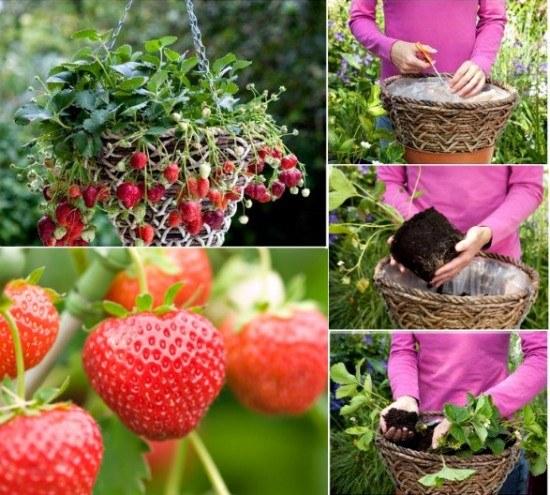 Strawberry-Baskets-wonderfuldiy