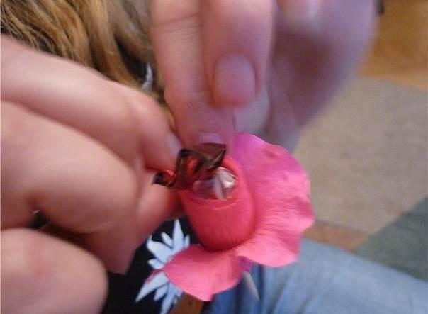 chocolate-bug-6