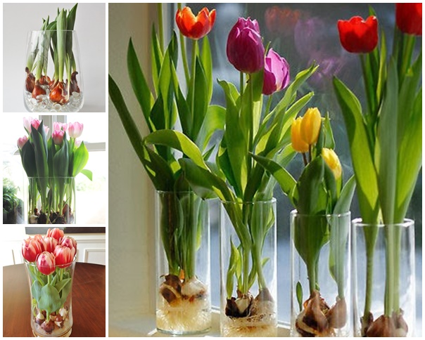 grow tulips in a vase -wonderfuldiy