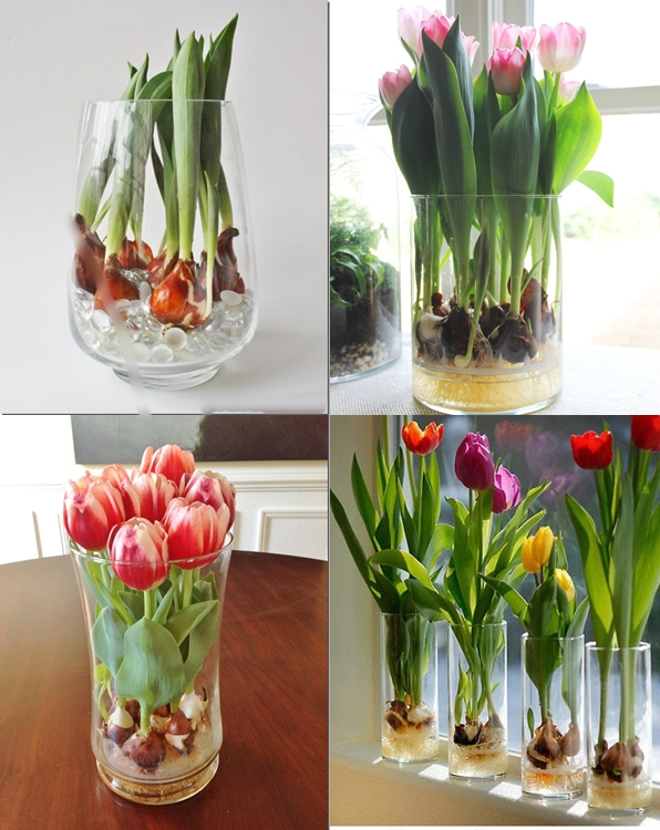 View In Gallery Grow Tulips Vase F How To A