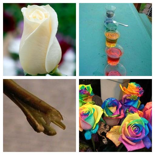 rainbow roses 2 Wonderful DIY Beautiful Rainbow Roses