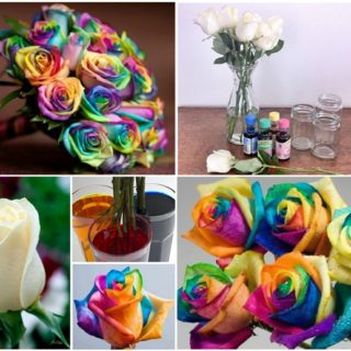 Wonderful DIY Beautiful Rainbow Roses