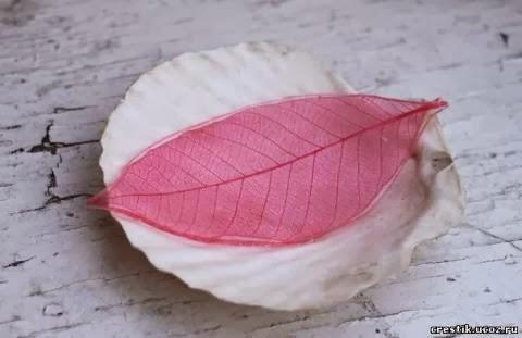 Skeleton-Leaves-9