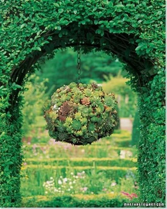 Succulent  Ball 0