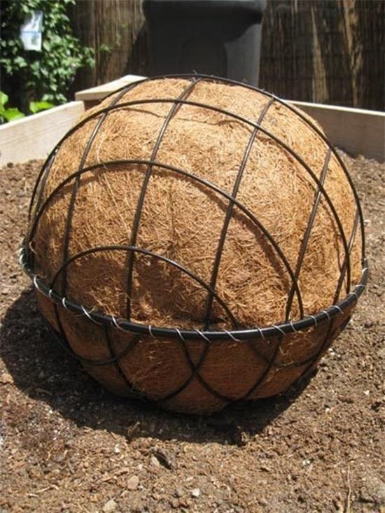 Succulent  Ball 4