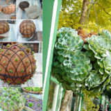 DIY Garden Succulent Balls – Beautiful Garden Accessories