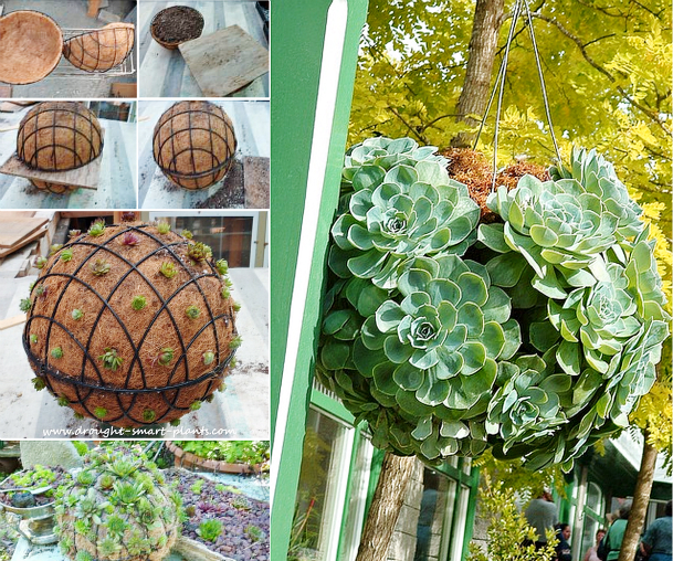 Succulent Ball F DIY Garden Succulent Balls – Beautiful Garden Accessories