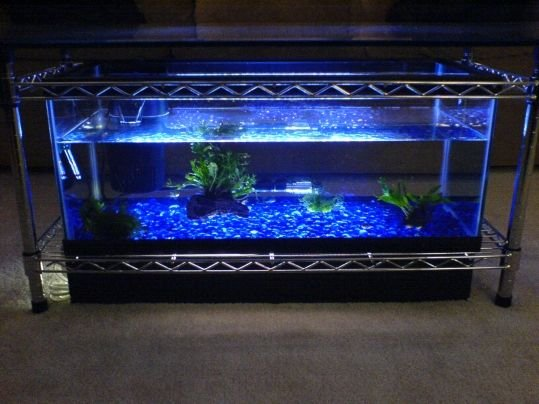 Glowing fish tank coffee table Spectacular DIY Fish Tank Coffee Table   Free Guide and Tutorial