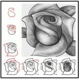 Wonderful Idea For Drawing A Beautiful  Rose