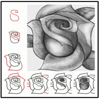 Wonderful Idea For Drawing A Beautiful  Rose