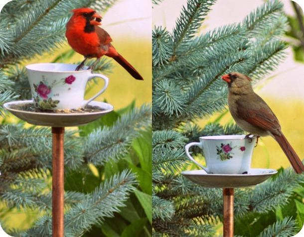 Tea-cup-bird-feeders6.1