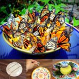 Wonderful DIY Amazing  Butterfly Feeder