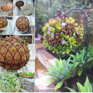 Gorgeous Gardening – Create Your Own Hanging Succulent Ball