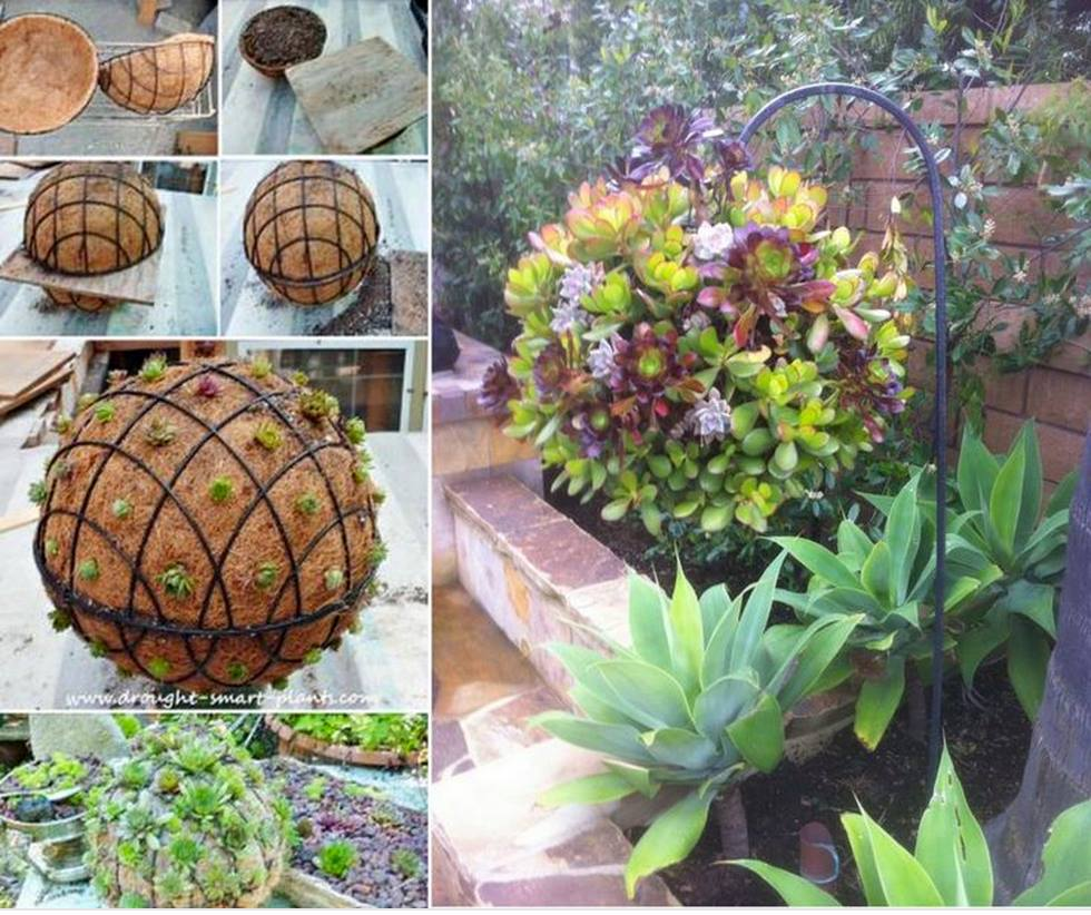 gorgeous gardening create your own hanging succulent ball. Black Bedroom Furniture Sets. Home Design Ideas