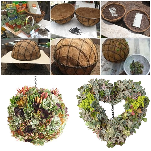 succulent Ball F2 Gorgeous Gardening   Create Your Own Hanging Succulent Ball