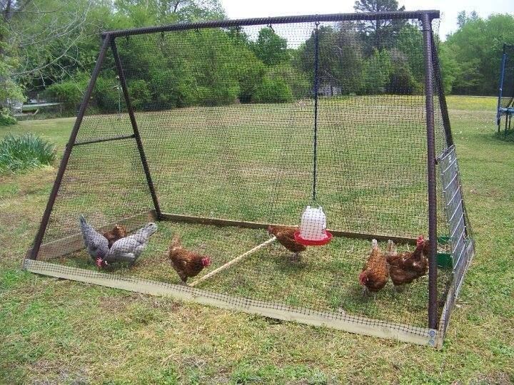 DIY-Backyard-Chicken-Coop from swing