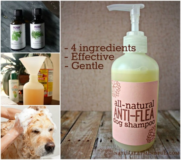 Make-Natural-Anti-flea-Dog-Shampoo–wonderfuldiy