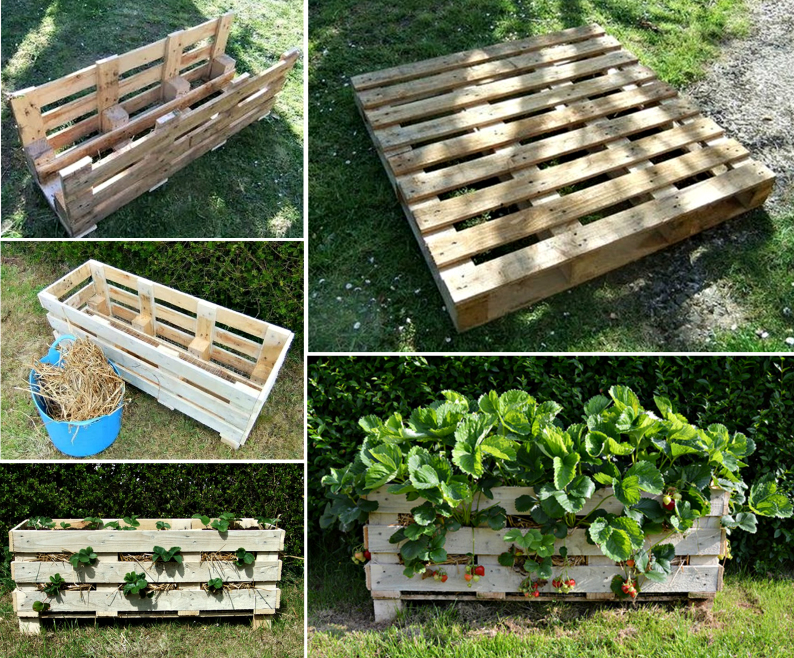 Strawberry-Planter-made-from-Pallet
