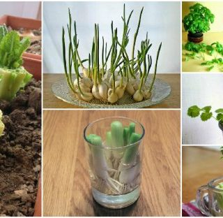 10 Vegetables You Can Regrow Time and Time Again!