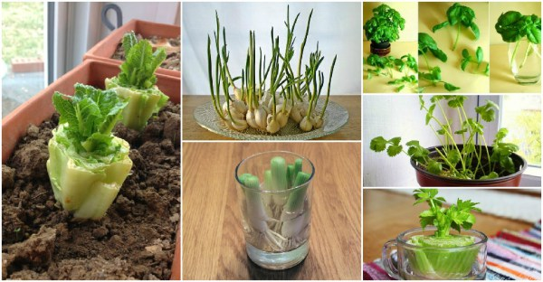 8-Vegetables-That-You-Can-Regrow-Again-And-Again