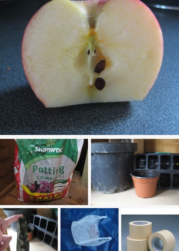 Grow Apple trees from Seed1