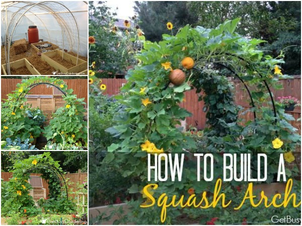 How To Build a Squash Arch f How To Build a Squash Arch