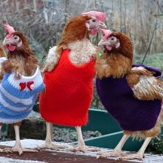 Coop Trends: Cute and Colorful Knitted Chicken Sweaters