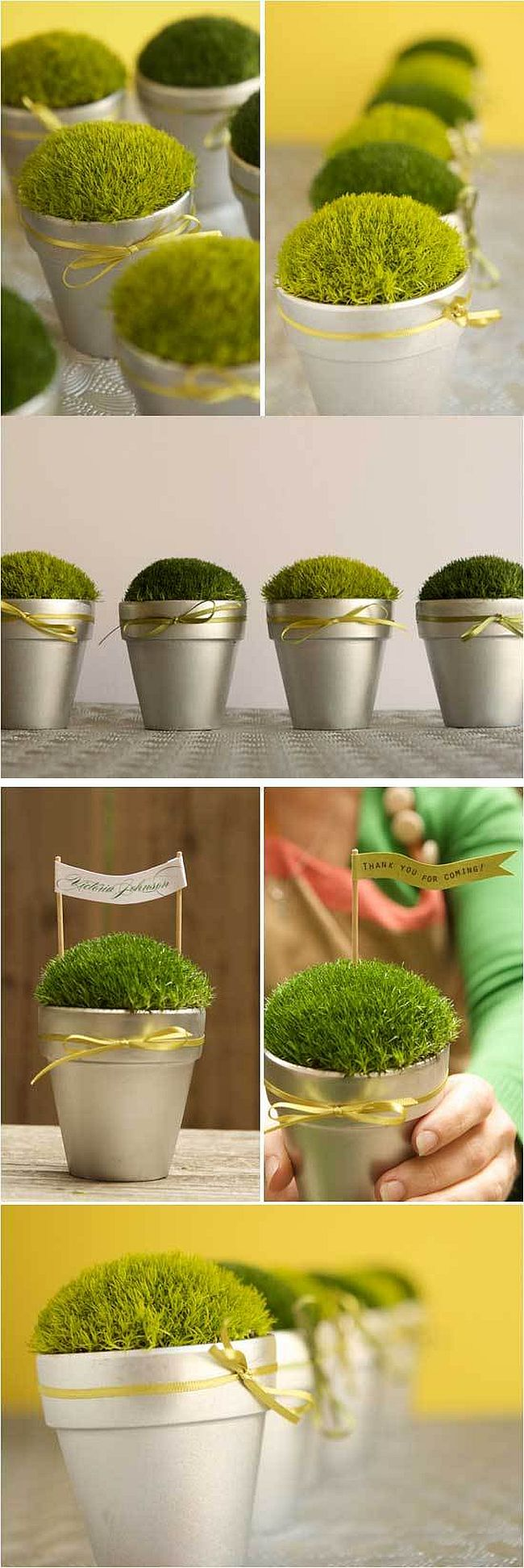 Little Pots of Moss