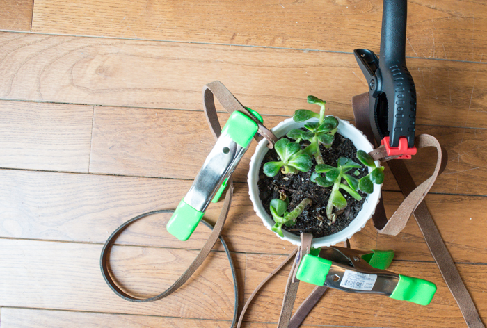 Old leather belts used for hanging planter