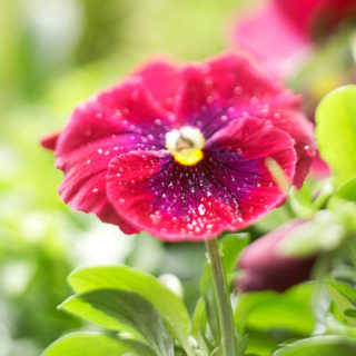 Spring Flowers to Grow in the Garden