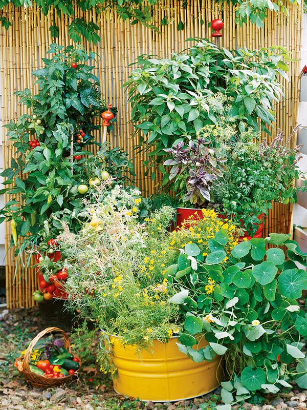 Vegetable garden at home - ideas