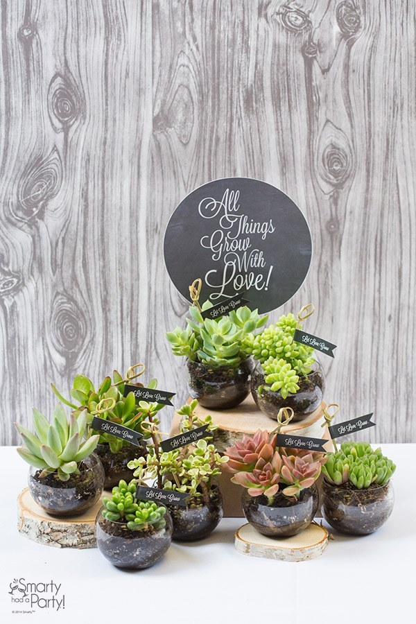 1 Succulent Party Favors