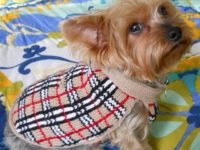 22Barkberry22 dog sweater 200x150 Knitted Dog Sweaters to Keep Your Pooch Warm
