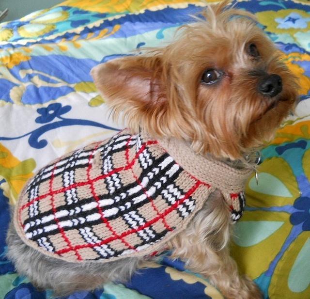 %22Barkberry%22 dog sweater