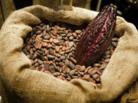 Cacao 200x150 Top 10 Aphrodisiac Plant Foods to Share with Your Lover!