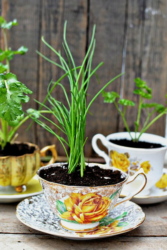 Colorful and creative herb cup