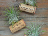 Cork Air Plant 200x150 Handmade Air Plant Décor Ideas to Brighten Your Home