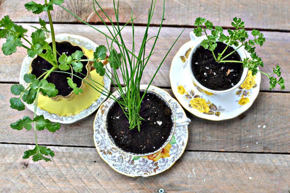 Cups and saucers turned into herb pots