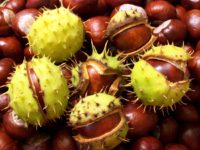 Horse Chestnut 200x150 8 Useful Woodland Medicinal Plants