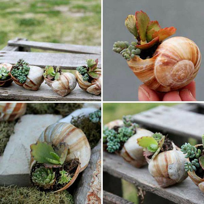 Make your own cool potted shell