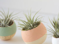 Painted Air Plant Caps 200x150 Handmade Air Plant Décor Ideas to Brighten Your Home