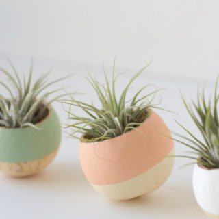 Handmade Air Plant Décor Ideas to Brighten Your Home