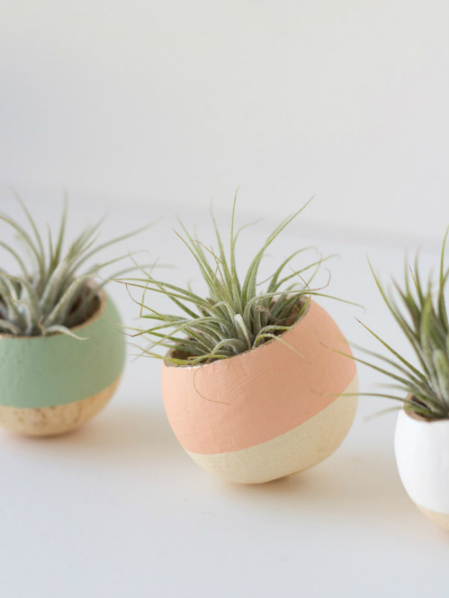 Painted Air Plant Caps