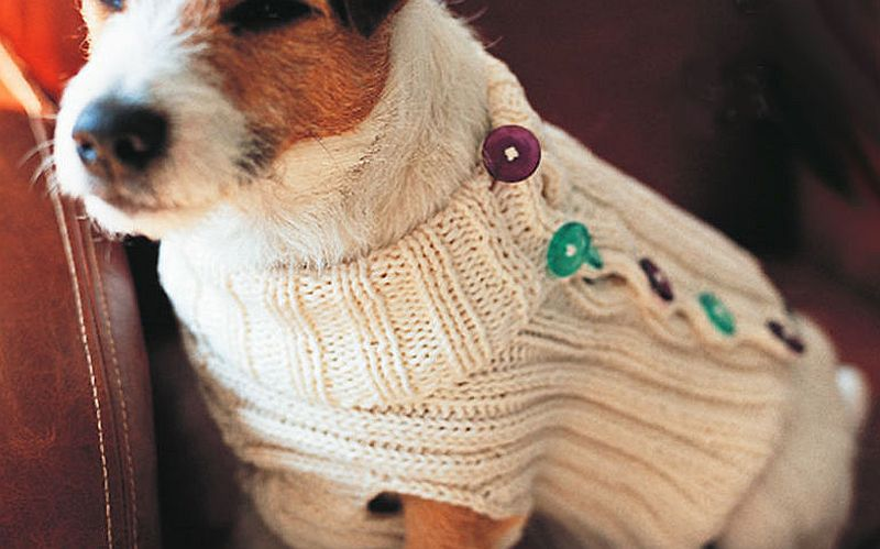 Side buttoned sweater for dogs