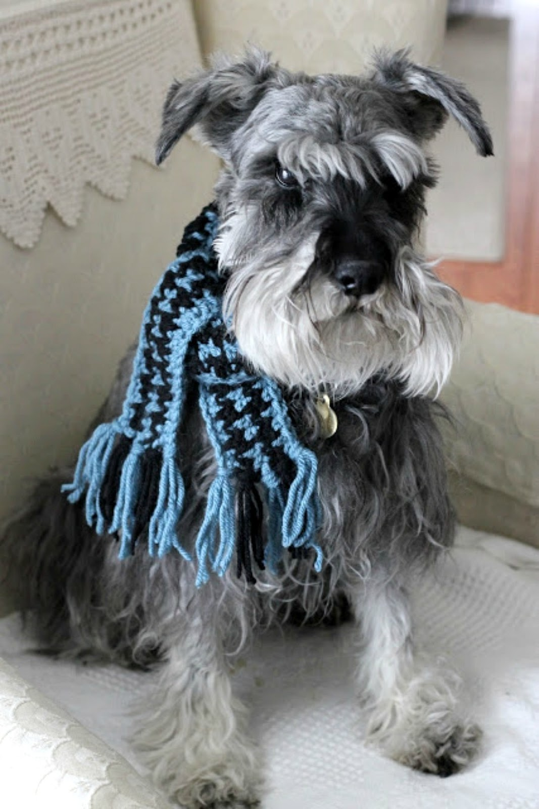 Crochet Pet Scarf