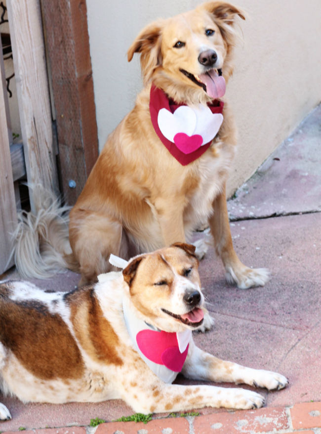 Dog Heart Scarves