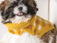 Gingham Style Crochet Dog Sweater 200x150 These Free Crochet Patterns Will Give You the Best Dressed Dog in Town